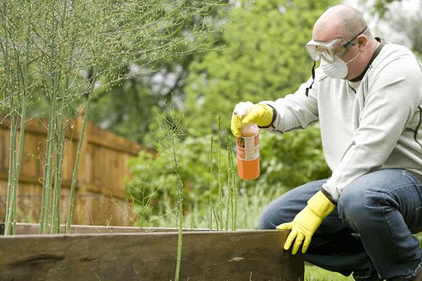 Organic_spraying