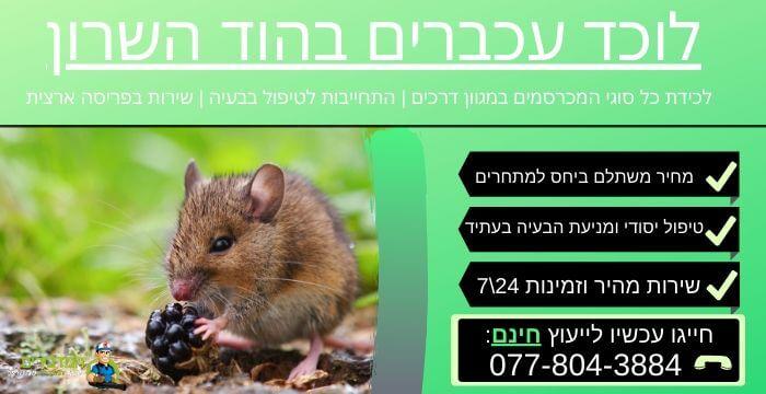 לוכד עכברים בהוד השרון