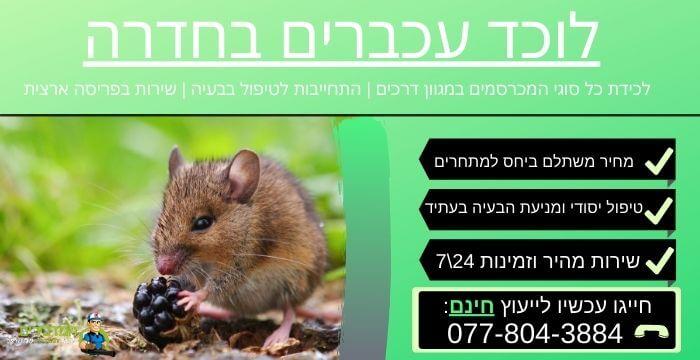 לוכד עכברים בחדרה