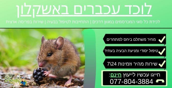 לוכד עכברים באשקלון